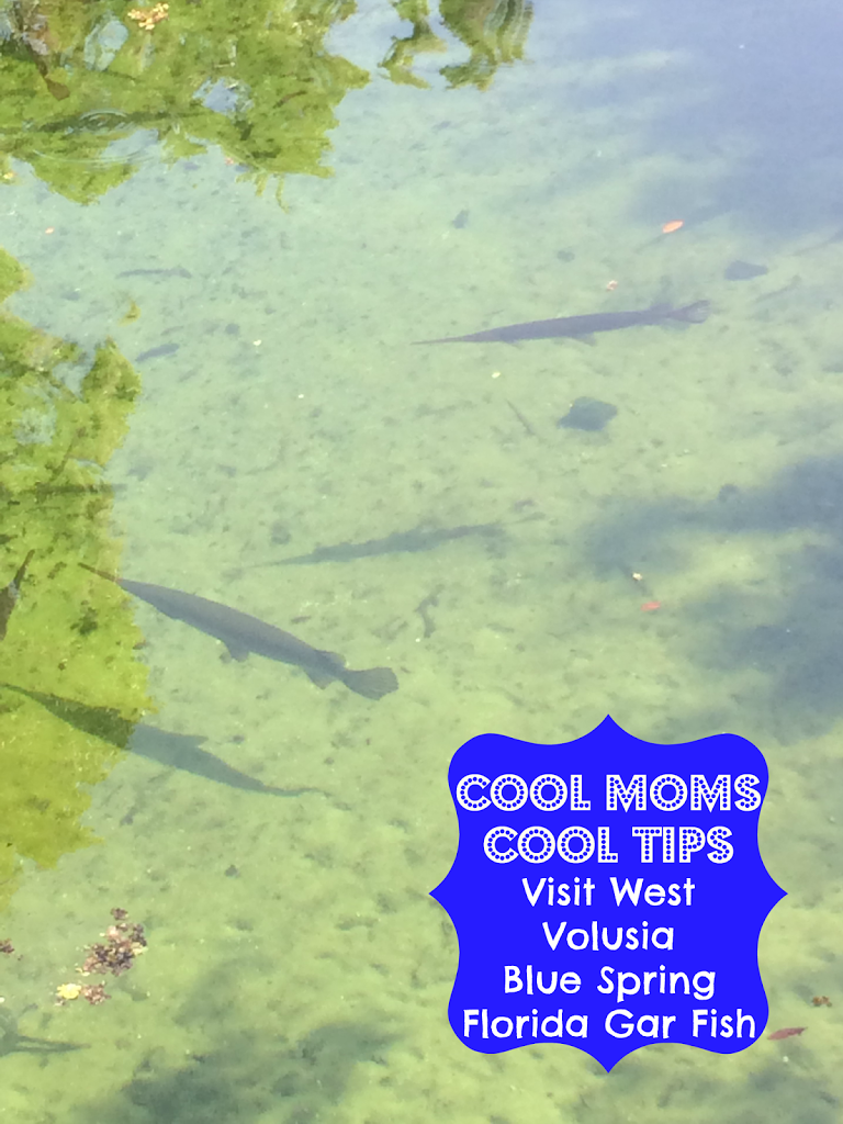 Visit west volusia a frugal florida vacation of endless for Florida gar fish