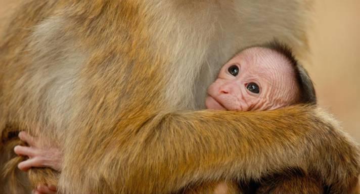 Monkey Kingdom by Disney Nature on DVD
