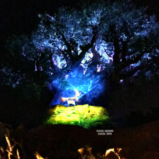 animal kingdom after sunset cool moms cool tips projection