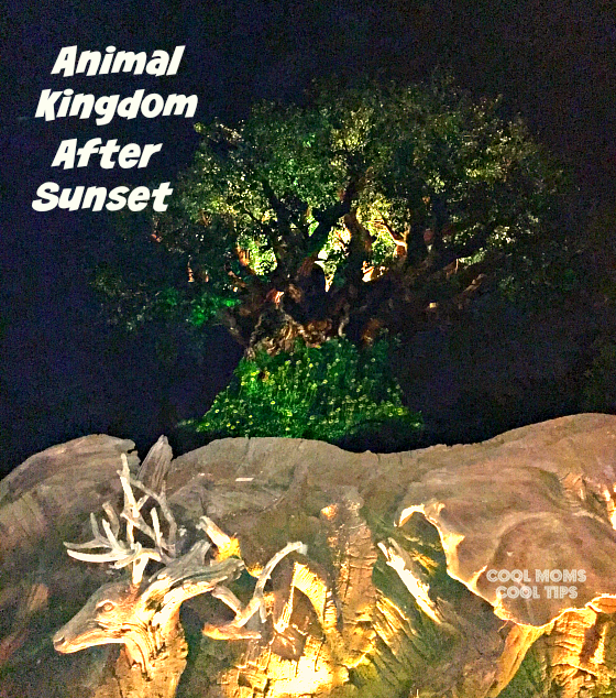 animal kingdom after sunset cool moms cool tips