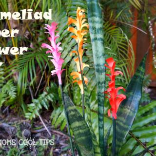 bromeliad paper flower DIY cool moms cool tips