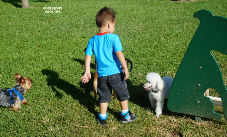making firends at dog park cool moms cool tips #friendsofbeneful #ad