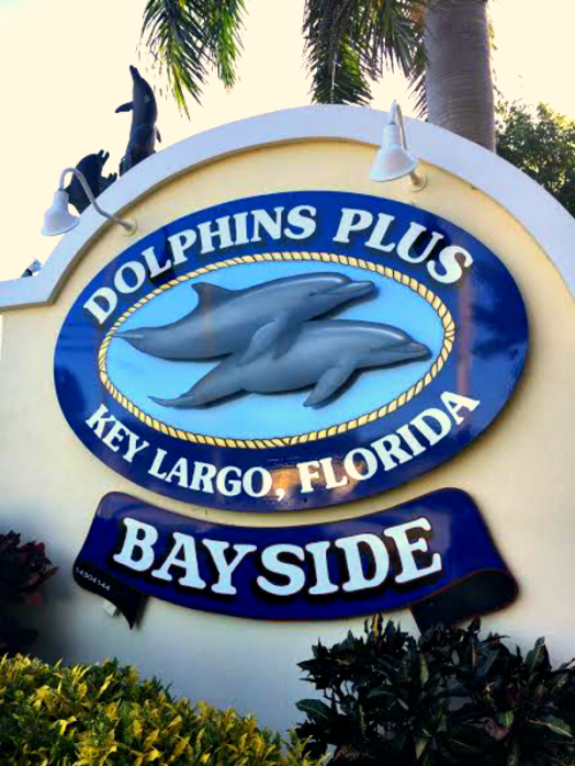Dolphins Plus in Key Largo Florida specializes in swimming with dolphins.