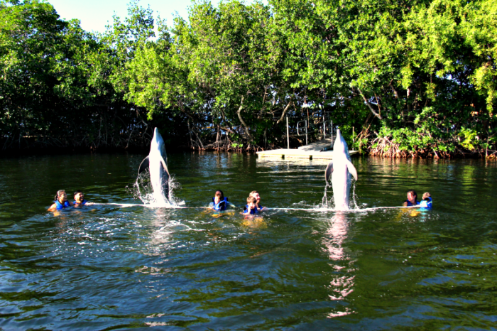 Swimming with dolphins at Dolphins Plus in Key Largo Florida.