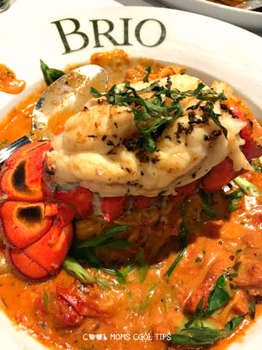 lobster dish at brio cool moms cool tips