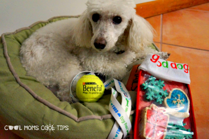 pet holidays cool moms cool tips