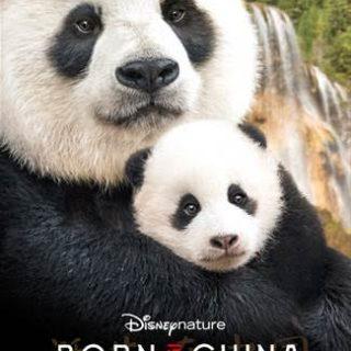 watch born in china