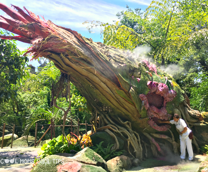 Explore Pandora at Disney's Animal Kingdom