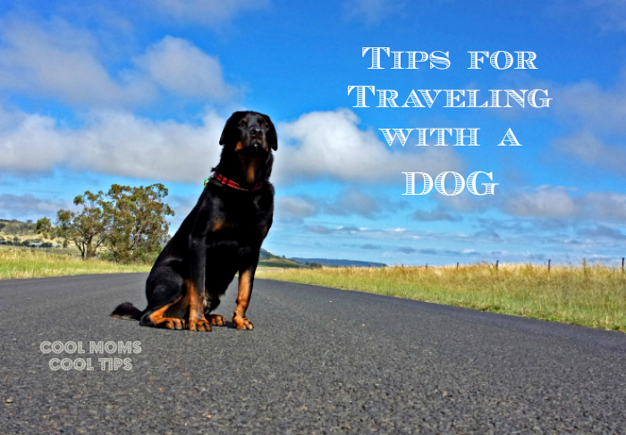 dog-on-the-road-cool-moms-cool-tips #ad