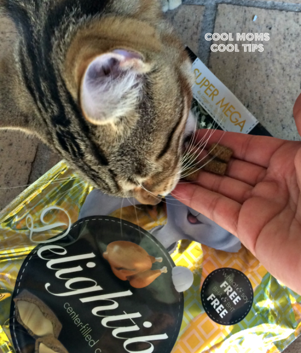 cat-and-treats-cool-moms-cool-tips
