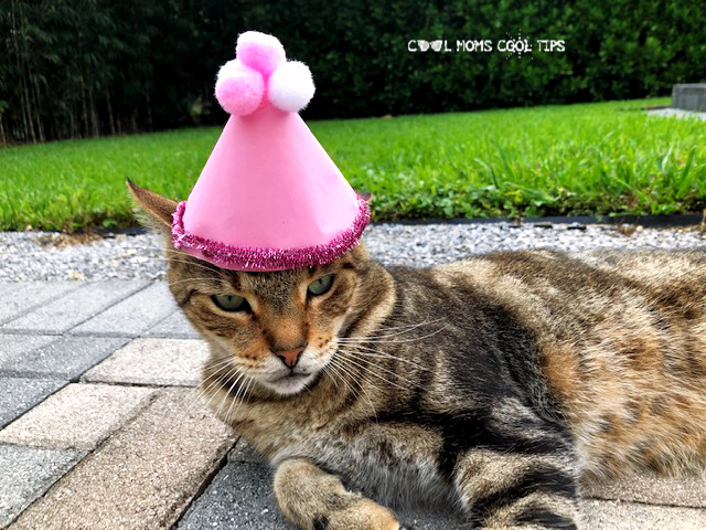 The Secret Life of Pets 2 DIY Daisy's Happy Hat