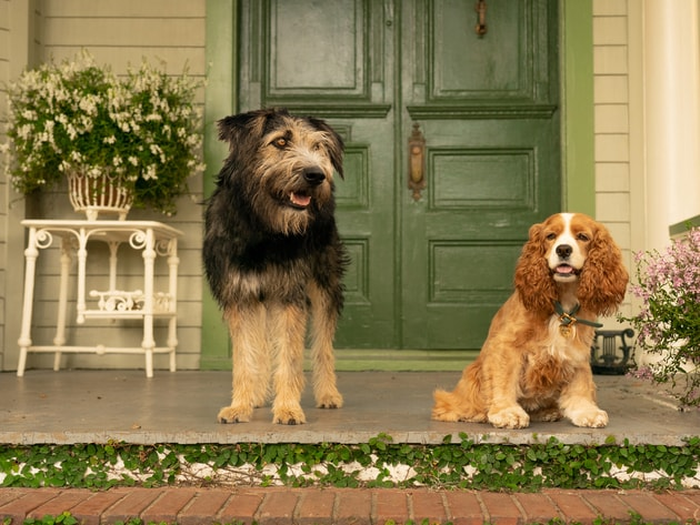 monty-and-rosie-dogs-min